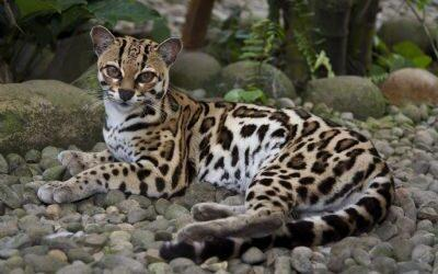 The Guanacaste Conservation Area is a model for the World